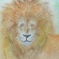 Lion by Sandra Dorton
