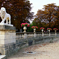 Lion Sculptue Luxembourg Garden Paris France by Renata Ratajczyk
