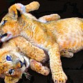 Lion Wrestling by Michael Durst
