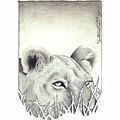 Lioness Rising by Brandon O'Brien