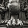 Lions Claw by Anna Jo Noviello