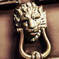 Lion's Den by Tom Gowanlock