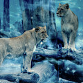 Lions Of The Mist by Pixabay