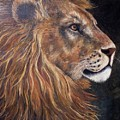 Lions Portrait by Pamela  Squires