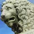 Lions Roar by D Hackett