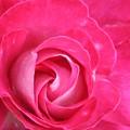 Lipstick Pink Rose by Deborah Brewer