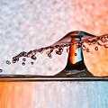 Liquid Umbrella by Alapati Gallery