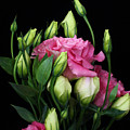 Lisianthus Flowers by Carol Welsh