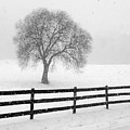 Listen The Snow Is Falling All Around by J K York