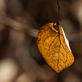 Little Autumn Leaf by Alissa Beth Photography