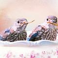 Little Bambinos by Tina LeCour
