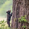 Little Bear Big Tree by Sylvia J Zarco