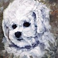 Little Bichon  by Jimmie Trotter