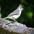 Little Bird by Lilia D