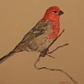 Little Bird by Michelle Miron-Rebbe