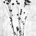 Little Birds by Ekaterina Torganskaia