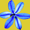 Little Blue Flower On A Yellow Background by Trevor McMullan