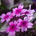 Little Blue Flowers  by Jeff Swan