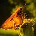Little Brown Skipper Butterfly by Debra Lynch