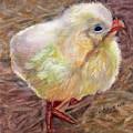 Little Chick by Katherine  Berlin