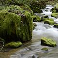 Little Creek 5 by Bob Christopher