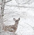 Little Doe In Snow by Benanne Stiens