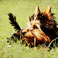 Little Dog by Angela Doelling AD DESIGN Photo and PhotoArt