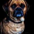 Little Dog Big Heart by Bob Orsillo