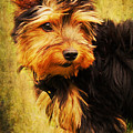 Little Dog II by Angela Doelling AD DESIGN Photo and PhotoArt
