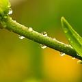 Little Drops Of Rain by Amanda Kiplinger