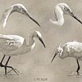 Little Egret by Arie Van der Wijst