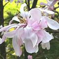 Little English Flower by Sarah Madsen