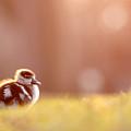 Little Furry Animal - Gosling In Warm Light by Roeselien Raimond