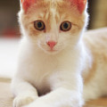 Little Kitty by Mark Miller