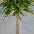 Little Palm Tree by Jamie Frier