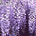 Little Petals Db by Lyle Crump