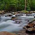Little Pigeon Fork by Dennis Nelson