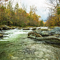 Little Pigeon River Greenbrier Area Of Smoky Mountains by Carol Mellema