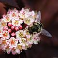 Little Pink Flowers by Deborah Benoit