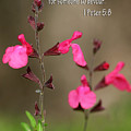 Little Pink Wildflowers With Scripture by Linda Phelps