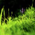 Little Purple Flower by Onyonet  Photo Studios