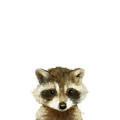 Little Raccoon by Amy Hamilton