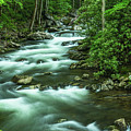 Little River Tremont Area Of Smoky Mountains National Park by Carol Mellema