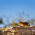 Little Squirrel by Mirko Chianucci