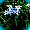 Little Star Wind Flowers by Debra Lynch