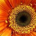 Little Sun by Rhonda Barrett