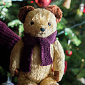 Little Sweet Teddy Bear With Knitted Scarf Under The Christmas Tree by Andrea Varga