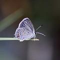 Little Teeny - Butterfly by Travis Truelove