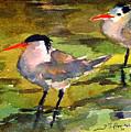 Little Terns by Julianne Felton