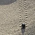 Little Tracks by David Andersen